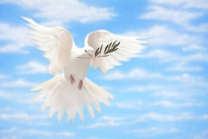 White Dove of Peace With Olive Branch